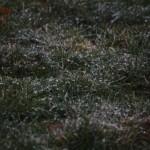 The crunchy grass